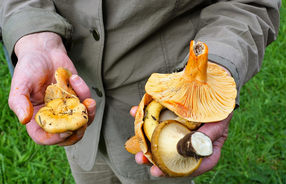 mushrooms-2675974_960_720.jpg